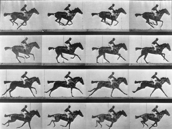 Il cavallo in movimento 1878 - Eadweard Muybridge